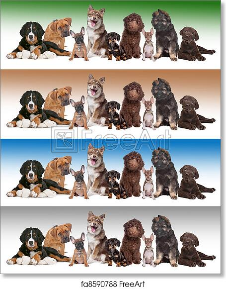 Free Art Print Of Group Of Puppies On Diverse Gradient Backgrounds