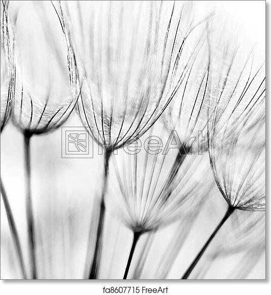Free art print of Abstract dandelion flower background. Black and ...