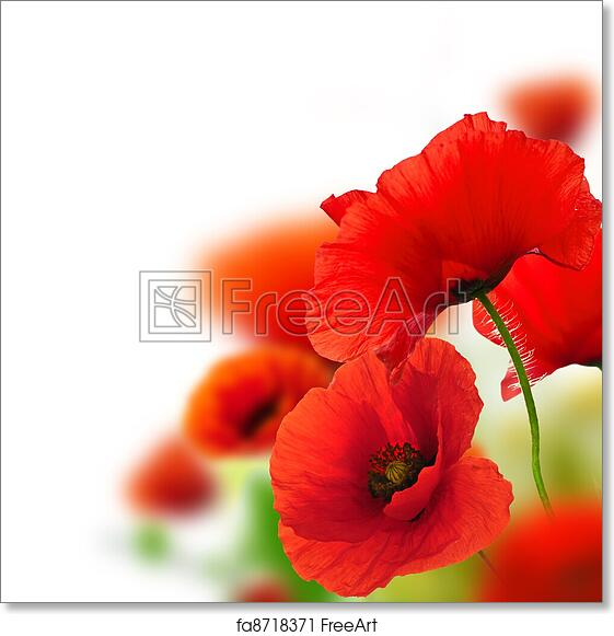 Free Art Print Of Poppies White Background Green And Red Floral