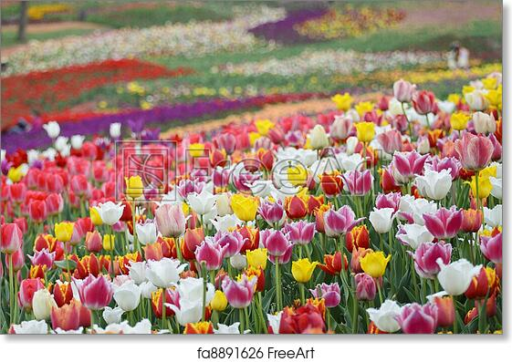 Free Art Print Of Spring Flowers Background Field Of Bright