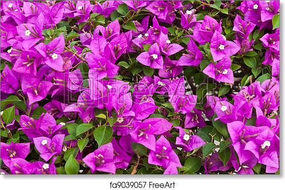 Free art print of bougainvillea paper flower bougainvillea paper free art print of bougainvillea paper flower mightylinksfo