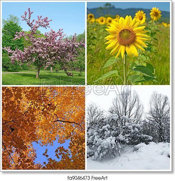 Free art print of Spring, summer, autumn, winter. Four ...