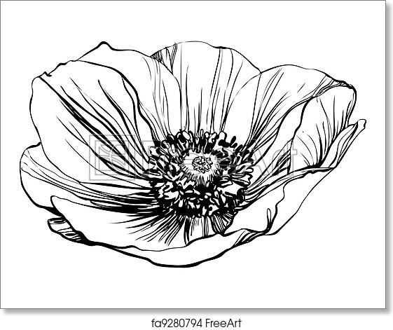 Free Art Print Of Poppy Flower A Black And White Picture Poppy