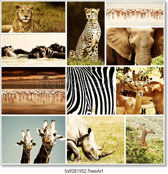 free art print of african animals safari collage african wild