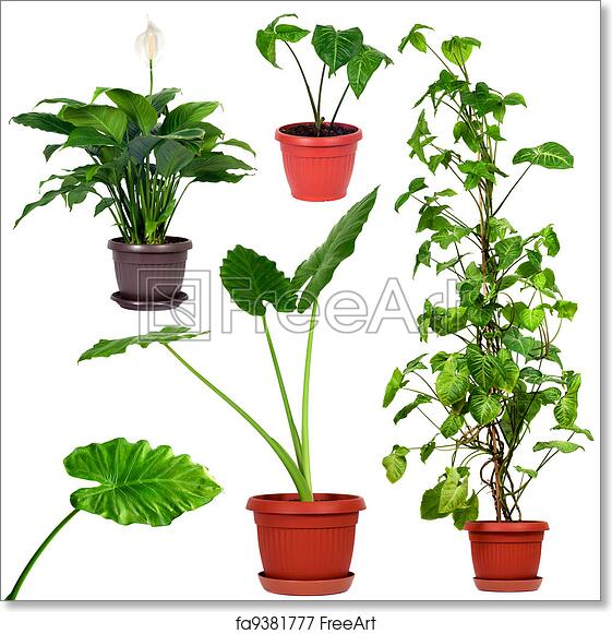 Free Art Print Of Collection Of Different House Plants Set Of