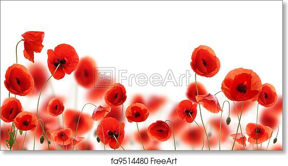 Free art print of poppy flowers isolated on white background free art print of poppy flowers isolated on white background mightylinksfo