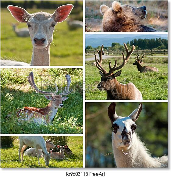 Free Art Print Of Wild Animals Zoo Collage With Six Photos North America