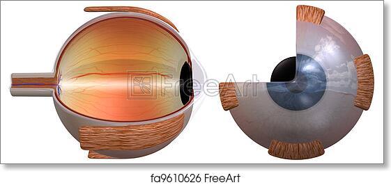 3d Eye Diagram Trusted Wiring Diagrams