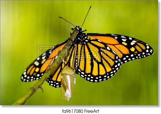 Choose Any 4 of Our Wildlife Nature 8x10 Prints Pictures Photos Butterfly Animal