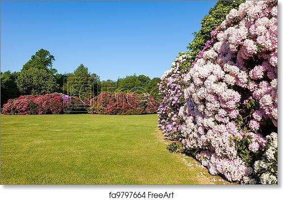 Free art print of Rhododendron Flower Bushes Garden. Beautiful ...